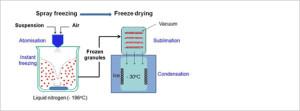 Illustration of Freeze Granulation